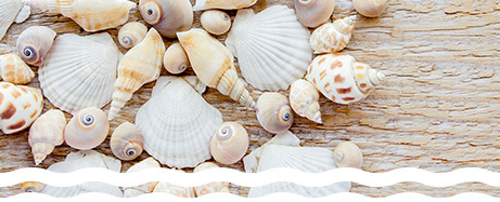 Crafting with scallop shells